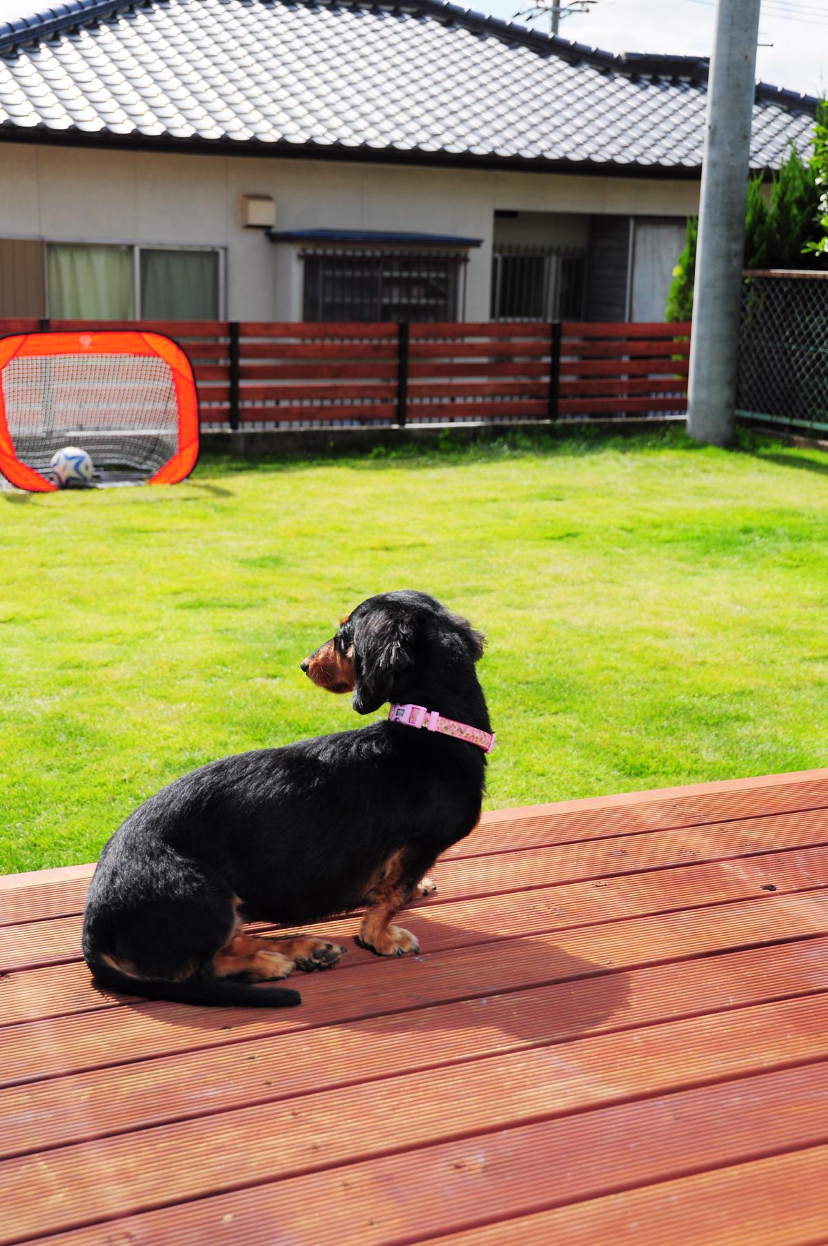 愛犬と家族が楽しく暮らすお家 ドッグラン ウッドデッキ ウッドフェンス